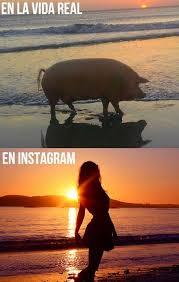 Editor De Memes - vida real vs editor de fotos memes pinterest humor memes