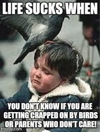 Poop Meme - bird poop blues meme generator imgflip