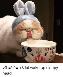Sleepy Memes - wake up sleepy head meme up best of the funny meme
