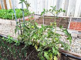 raised garden beds 101 tips on planning building u0026 using