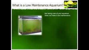 low maintenance how to set up low maintenance aquariums youtube