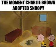 Charlie Brown Memes - charlie brown pictures photos images and pics for facebook