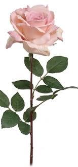 silk roses silk stems