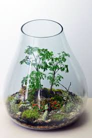 43 best my terrariums images on pinterest green gifts
