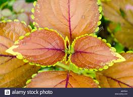 nature u0027s color scheme at display vibrant multicolored leaves in a