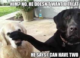 Hyper Dog Meme - who wants a treat dog labradors and animal