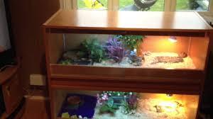 tortoise home decor home built double vivarium for the tortoise family marginated