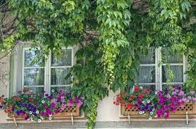 Wooden Window Flower Boxes - 37 gorgeous window flower boxes with pictures