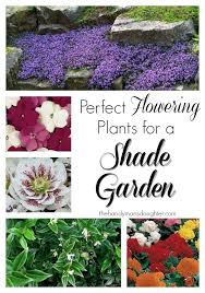 117 best shade plants images on pinterest shade plants flowers