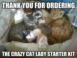 Funny Cat Lady Memes - cat lady memes
