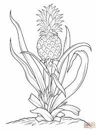 palm tree drawing easy draw8 info