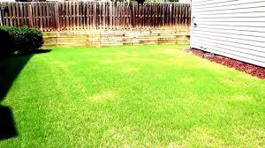 spot treating weeds v s blanket spraying weeds broomsedge weeds