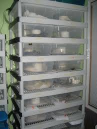 Plastic Shelving Unit by Diy 9 Tub Breeder Rack Lightweight Plastic Shelving Unit Page 2
