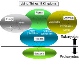 Diseases Caused By Protozoa In Plants - infectious agents