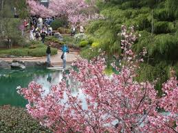 Auburn Botanical Garden Cherry Picture Of Auburn Botanic Gardens Auburn Tripadvisor