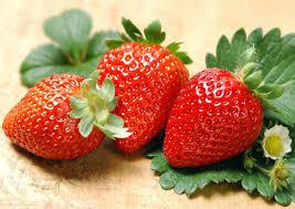 amazon com albion everbearing strawberry 50 bare root plants