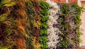 living wall diy vertical garden home design interior