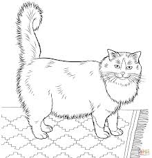 stylish ideas ragdoll animal coloring pages exprimartdesign com
