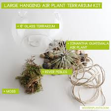 hanging air plant terrarium kit modern plants