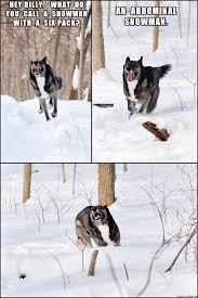 snow pun dog meme on imgur
