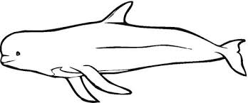 whale coloring pages 19101 png clip art library