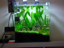 membuat aquascape bening cara membuat air di aquascape menjadi bening tips ikan