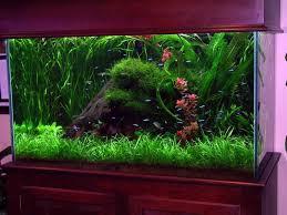 deko für aquarium selber machen u2013 30 kreative ideen