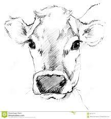 cow sketch dairy cow pencil sketch stock illustration image