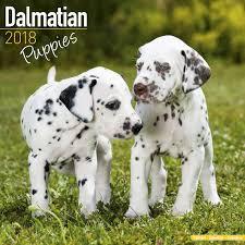 dalmatian puppies calendar 2018 pet prints