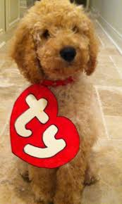 best 20 puppy halloween costumes ideas on pinterest puppy