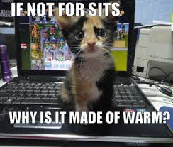 Cat Problems Meme - if not for sits why is it made of warm very funny cute cat