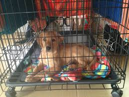 crate training crate training a new puppy what you need to know life with a puppy