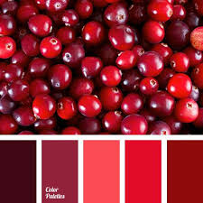 17 best aurora red color from pantone for fall 2016 images on