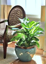 indoor plants singapore 5 pretty houseplants that will help clean the air home decor