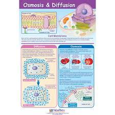 osmosis u0026 diffusion poster