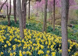 cheap landscaping ideas diy network blog made remade diy