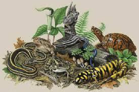 Backyard Reptiles Lizard T Shirts For Adults And Children