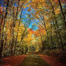 route traveled fall foliage white mountains