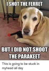 Ferret Meme - i shot the ferret but did not shoot the parakeet ferret meme on me me