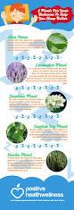 Best Plants For Bedrooms 5 Plants For Your Bedroom To Help You Sleep Better U2013 Positive