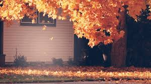leaves west virginia change color heart wv