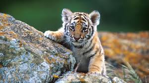 wildlife images Adorable wildlife pictures 30806 1366x768 px jpg