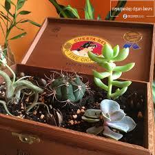 vintage cactus ring holder images Vintage makeover a desktop cactus garden in your old cigar box jpg