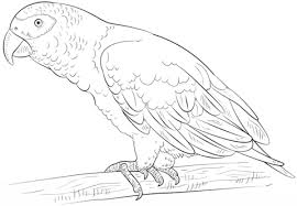 parrot coloring pages get this printable rainbow coloring pages 9wchd