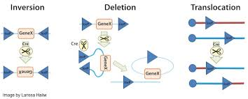 addgene blog a better way to share science plasmid elements