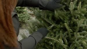 Christmas Tree Shopping Tips - christmas tree shopping tips u2013 monkeysee videos