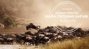 couchsurfing in africa safari junkie