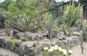 arid garden yumi u0026 achille