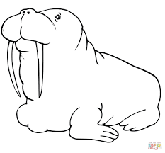 coloring page for walrus walrus coloring pages free coloring pages