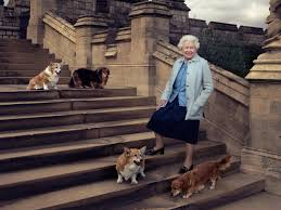 queen elizabeth mourns the death of one of her beloved corgis